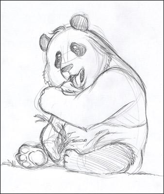 Comment Dessiner Un Panda Manga