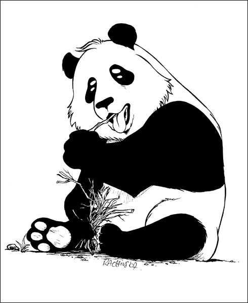 rachiuscom comment dessiner un panda manga